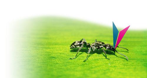 Una formica su una foglia